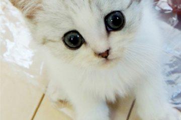 仔猫のメイがやってきた!