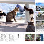 猫島のら猫マガジン 001