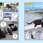 猫島のら猫マガジン 002