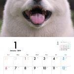 秋田犬 2019年カレンダー 001