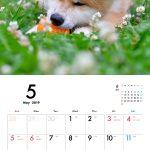 秋田犬 2019年カレンダー 002