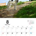 秋田犬 2019年カレンダー 003