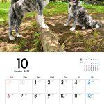 秋田犬 2019年カレンダー 004