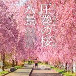 一度は行きたい! 絶景桜 東日本編 001