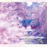 一度は行きたい! 絶景桜 東日本編 002