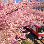 一度は行きたい! 絶景桜 東日本編 004