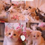 ニャンころりん。子猫カレンダー4 001
