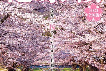一度は行きたい! 絶景桜 2020全国版