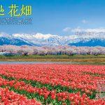 一度は行きたい! 絶景桜 2020全国版 004