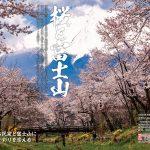 一度は行きたい! 絶景桜 2020全国版 005