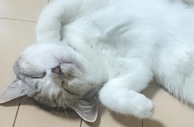 cat_190101