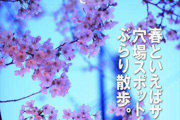 Tokyo Cherry Blossom 東京の桜 ~練馬・南蔵院、学田公園・中村橋~