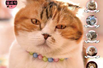 ブサかわいい猫 週めくりカレンダーMOOK