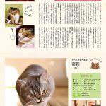 ブサかわいい猫 週めくりカレンダーMOOK 001
