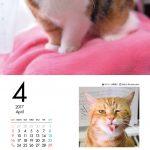 ブサかわいい猫 週めくりカレンダーMOOK 002