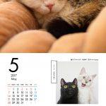 ブサかわいい猫 週めくりカレンダーMOOK 003