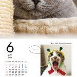 ブサかわいい猫 週めくりカレンダーMOOK 004
