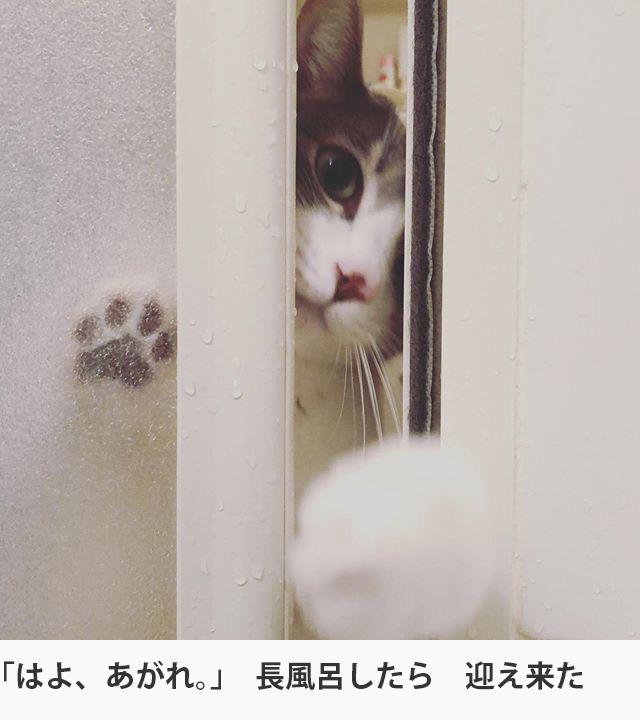 にゃんこ大賞 20200207