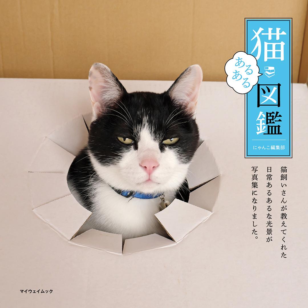 『猫あるある図鑑』