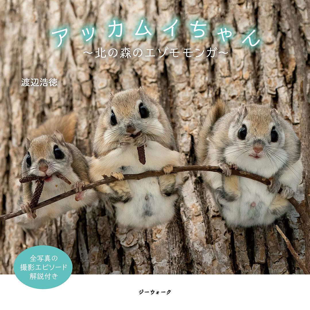 アッカムイちゃん 〜北の森のエゾモモンガ〜