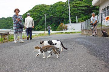 田代島のニャンころりん。 002