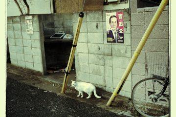 東京さんぽ猫 002