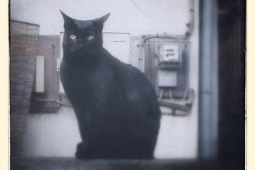 東京さんぽ猫 003