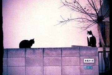 東京さんぽ猫 004