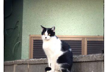 東京さんぽ猫 006