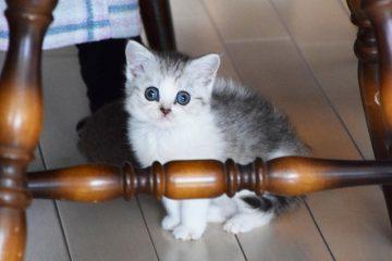 仔猫のメイがやってきた! 001