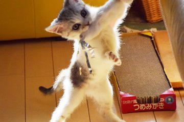 仔猫のメイがやってきた! 006